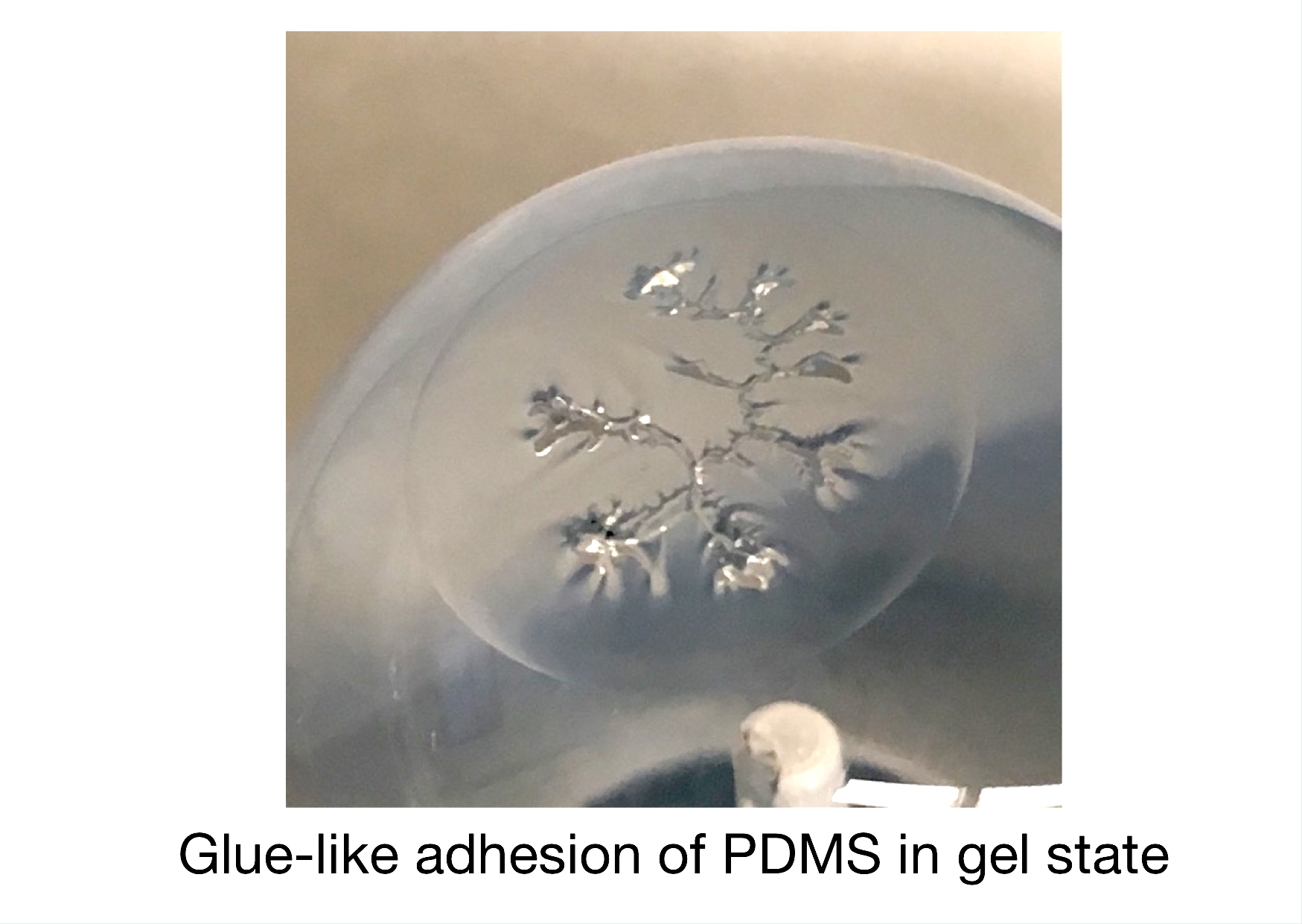 Adhesion between polydimethylsiloxane (PDMS) and a glass ball is observed in the process of transformation of PDMS from a viscous liquid to viscoelastic solid.