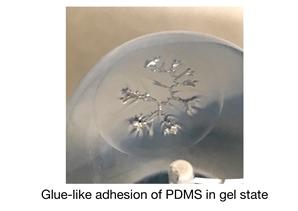 Рассматривается адгезия между полидиметилсилоксаном (PDMS) и стеклянным шаром в процессе превращения PDMS из вязкой жидкости в вязкоупругое тело.