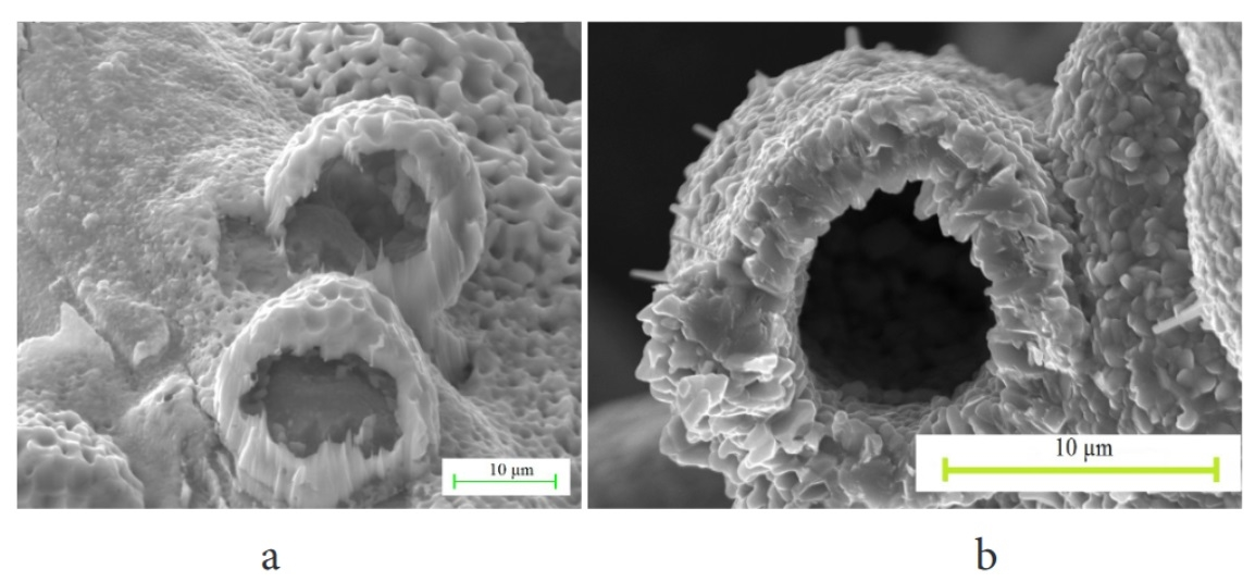 Сopper powders with approximately the same average particle size, but with different internal structures and surface morphologies were obtained by electrolytic  method in this work. SEM  image  of  surface  morphology  of  powder  particles  of  copper after heat treatment at T = 600°C: sample 1 (a), sample 2 (b) is shown on the figure.
