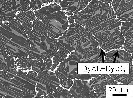 В данной работе изучено влияние легирования редкоземельным элементом диспрозием в сочетании с термической обработкой на микроструктуру и механические свойства на сжатие интерметаллидного β-затвердевающего γ-TiAl сплава. На изображении представлена микроструктура сплава Ti-45Al-6(Nb,Mo)-0,2B-1Dy, в которой наблюдаются прослойки DyAl2-фазы и оксидные частицы Dy2O3.