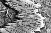 Metallographic methods were used to study the viscous character of the deformation in the regions of strong localized flow, including Roaldite (Fe, Ni) 4N plates in the alpha (Fi, Ni) meteorite of the Sikhote-Alin meteorite.