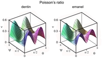 Variability of Poisson's ratios for dentin and enamel.